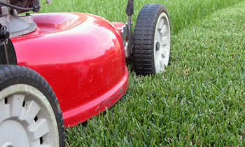 Lawn Care in Greenville NC Lawn Care Services in Greenville NC Quality Lawn Care in Greenville NC