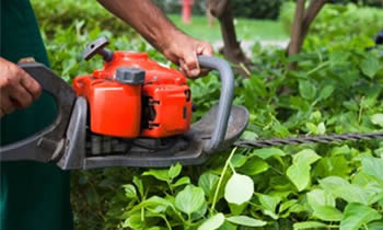 Shrub Removal in Greenville NC Shrub Removal Services in Greenville NC Shrub Care in Greenville NC Landscaping in Greenville NC