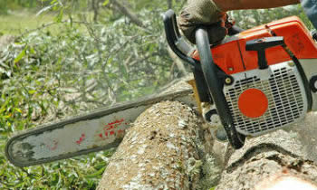 Tree Removal in Greenville NC Tree Removal Quotes in Greenville NC Tree Removal Estimates in Greenville NC Tree Removal Services in Greenville NC Tree Removal Professionals in Greenville NC Tree Services in Greenville NC