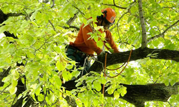 Tree Trimming in Greenville NC Tree Trimming Services in Greenville NC Tree Trimming Professionals in Greenville NC Tree Services in Greenville NC Tree Trimming Estimates in Greenville NC Tree Trimming Quotes in Greenville NC