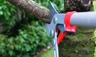 Tree Pruning Services in Greenville NC