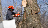 Tree Removal in Greenville NC